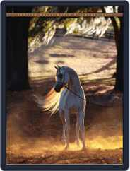 Arabian Horse World (Digital) Subscription January 13th, 2011 Issue