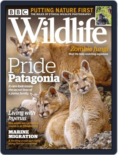 Bbc Wildlife October 1st, 2020 Digital Back Issue Cover