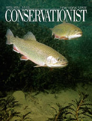 New York Conservationist