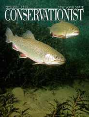 New York Conservationist Magazine Subscription